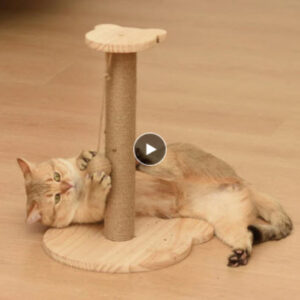 Cat Scratchers, Trees & Towers